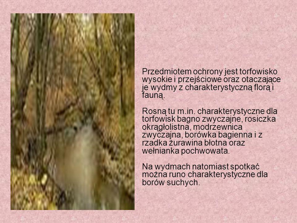 Rezerwat przyrody Pogorzelski Mszar Torfowiskowy rezerwat przyrody położony we wschodniej części Otwocka w województwie mazowieckim. Został powołany Z