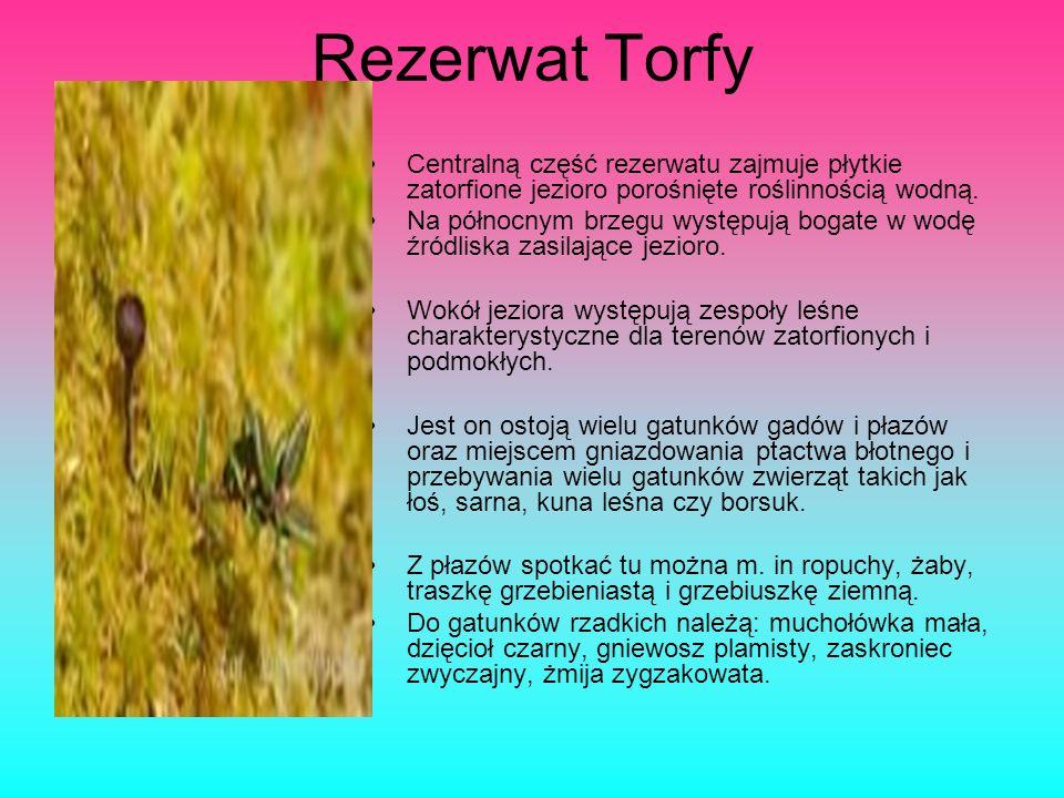 Rezerwat przyrody Na Torfach Faunistyczny rezerwat przyrody leżący na terenie Karczewa na południe od Otwocka w granicach Mazowieckiego Parku Krajobra