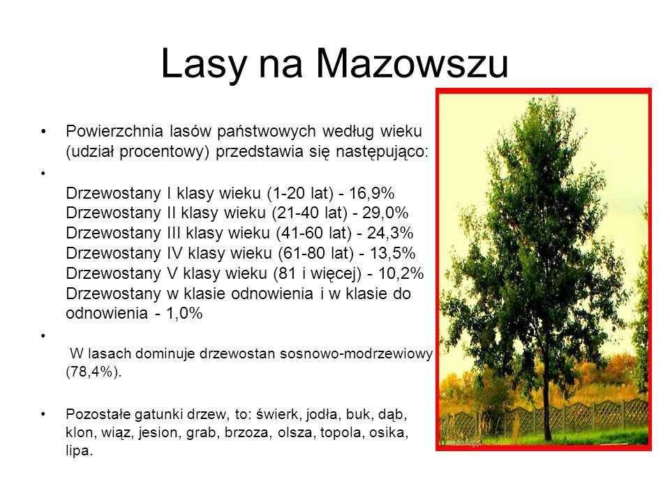 Lasy na Mazowszu Powierzchnia lasów państwowych według wieku (udział procentowy) przedstawia się następująco: Drzewostany I klasy wieku (1-20 lat) - 16,9% Drzewostany II klasy wieku (21-40 lat) - 29,0% Drzewostany III klasy wieku (41-60 lat) - 24,3% Drzewostany IV klasy wieku (61-80 lat) - 13,5% Drzewostany V klasy wieku (81 i więcej) - 10,2% Drzewostany w klasie odnowienia i w klasie do odnowienia - 1,0% W lasach dominuje drzewostan sosnowo-modrzewiowy (78,4%).