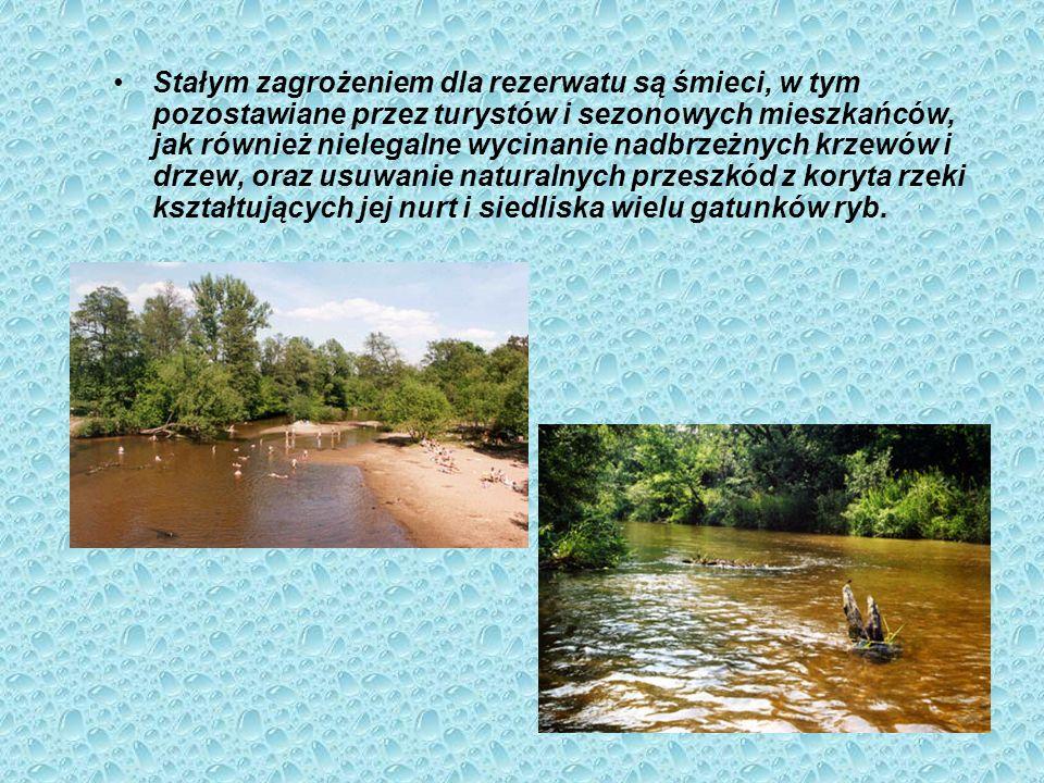 Rezerwat przyrody Świder Krajobrazowy rezerwat przyrody położony w obszarze miast Otwocka i Józefowa oraz gmin Wiązowna, Kołbiel i Siennica. Rezerwat