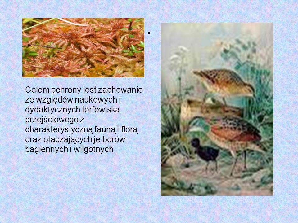 Rezerwat Żurawinowe Bagno Torfowiskowy rezerwat przyrody zlokalizowany w granicach wsi Regut, przy trasie Góra Kalwaria –Mińsk Mazowiecki, w gminie Ce