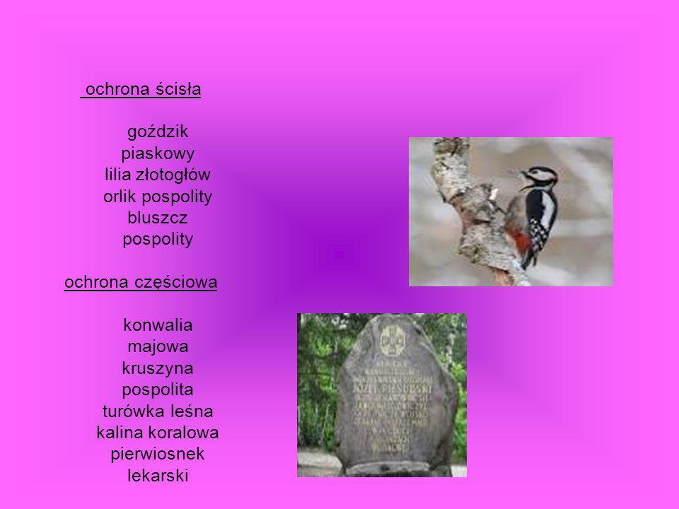ochrona ścisła goździk piaskowy lilia złotogłów orlik pospolity bluszcz pospolity ochrona częściowa konwalia majowa kruszyna pospolita turówka leśna kalina koralowa pierwiosnek lekarski