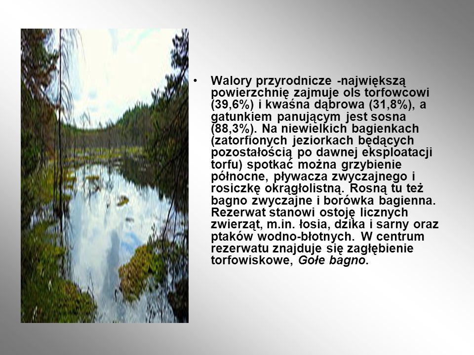 Centralną część rezerwatu zajmuje płytkie zatorfione jezioro porośnięte roślinnością wodną.