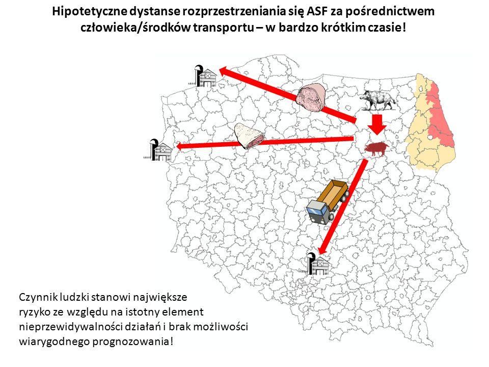 Hipotetyczne dystanse rozprzestrzeniania się ASF za pośrednictwem człowieka/środków transportu – w bardzo krótkim czasie.