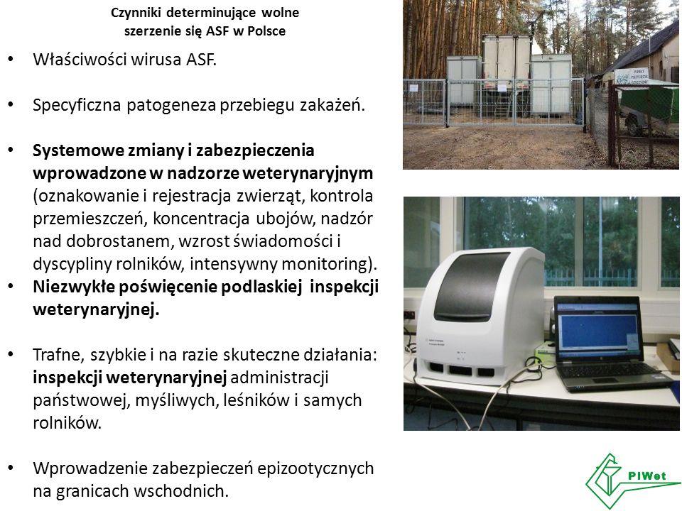 Czynniki determinujące wolne szerzenie się ASF w Polsce Właściwości wirusa ASF. Specyficzna patogeneza przebiegu zakażeń. Systemowe zmiany i zabezpiec