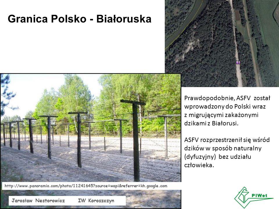 Granica Polsko - Białoruska http://www.panoramio.com/photo/11241645 source=wapi&referrer=kh.google.com Jarosław Nestorowicz IW Koroszczyn Prawdopodobnie, ASFV został wprowadzony do Polski wraz z migrującymi zakażonymi dzikami z Białorusi.