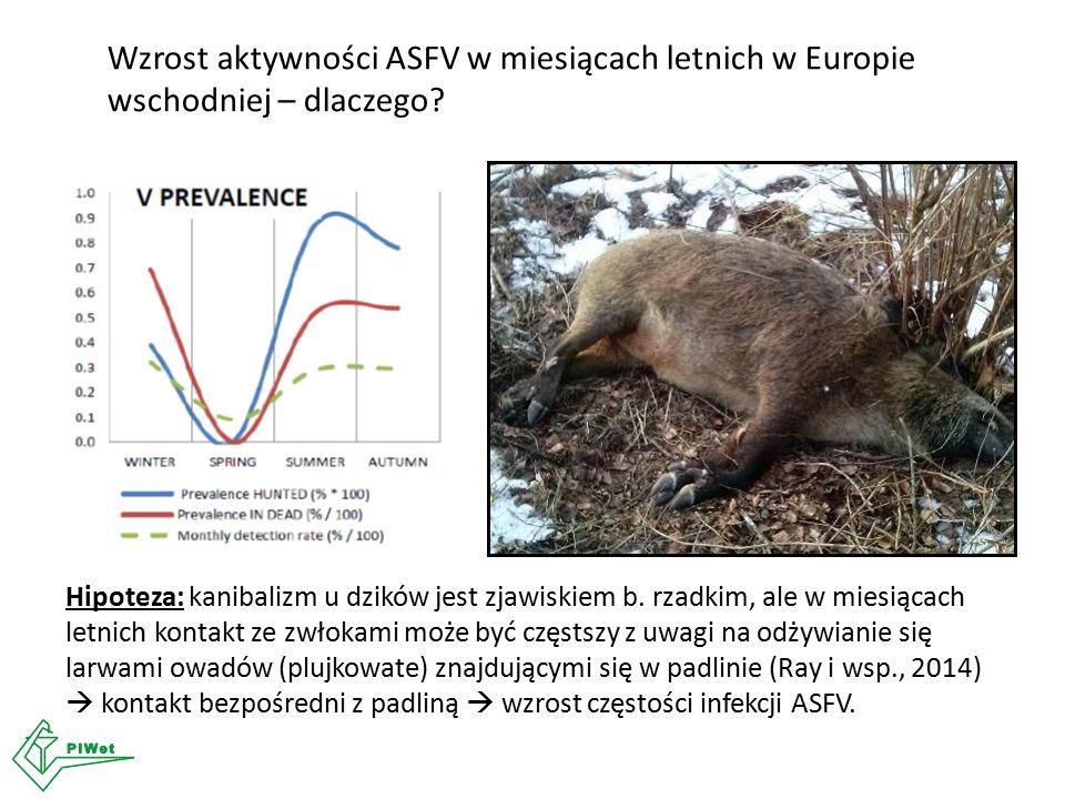 Wzrost aktywności ASFV w miesiącach letnich w Europie wschodniej – dlaczego? Hipoteza: kanibalizm u dzików jest zjawiskiem b. rzadkim, ale w miesiącac