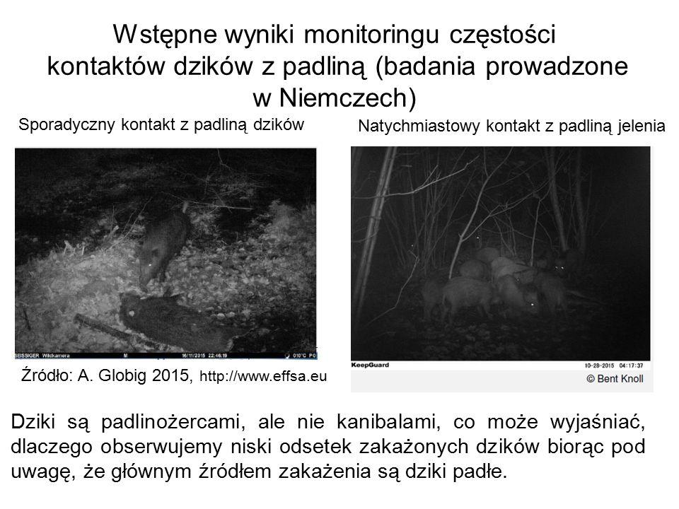 Źródło: A. Globig 2015, http://www.effsa.eu Wstępne wyniki monitoringu częstości kontaktów dzików z padliną (badania prowadzone w Niemczech) Sporadycz
