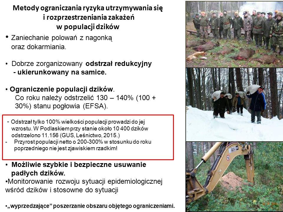 Metody ograniczania ryzyka utrzymywania się i rozprzestrzeniania zakażeń w populacji dzików Zaniechanie polowań z nagonką oraz dokarmiania. Dobrze zor
