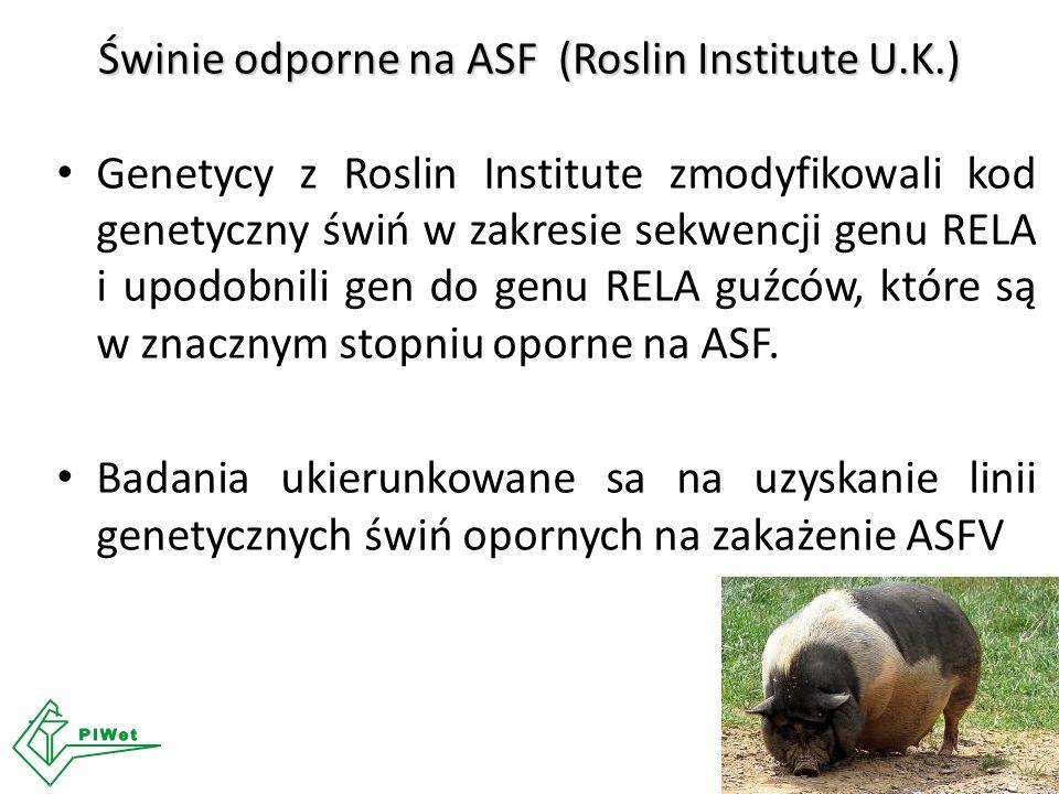 Genetycy z Roslin Institute zmodyfikowali kod genetyczny świń w zakresie sekwencji genu RELA i upodobnili gen do genu RELA guźców, które są w znacznym stopniu oporne na ASF.