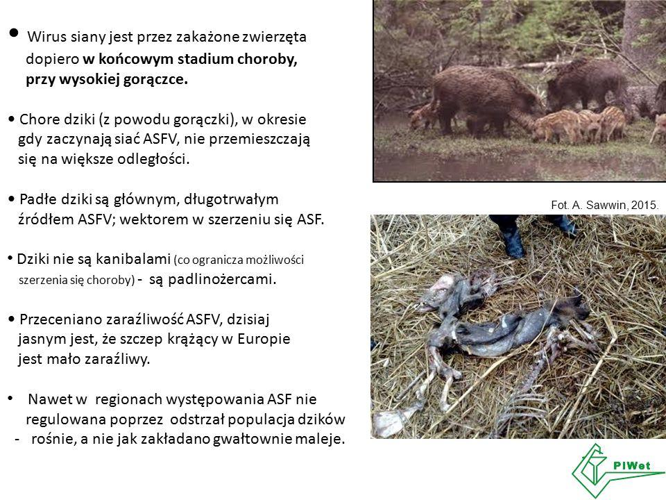 Wirus siany jest przez zakażone zwierzęta dopiero w końcowym stadium choroby, przy wysokiej gorączce. Chore dziki (z powodu gorączki), w okresie gdy z
