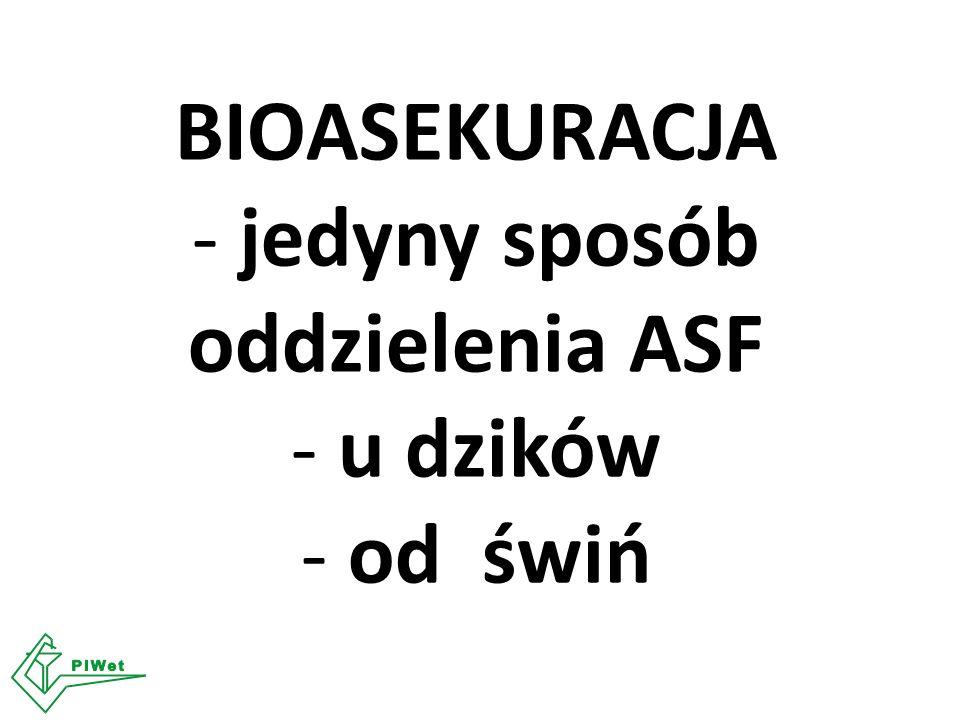 BIOASEKURACJA - jedyny sposób oddzielenia ASF - u dzików - od świń