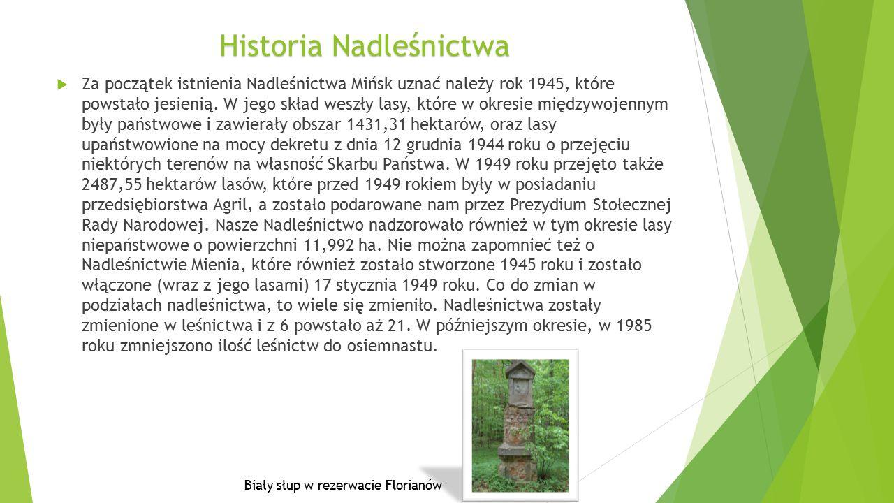 HistoriaNadleśnictwa Historia Nadleśnictwa  Za początek istnienia Nadleśnictwa Mińsk uznać należy rok 1945, które powstało jesienią.