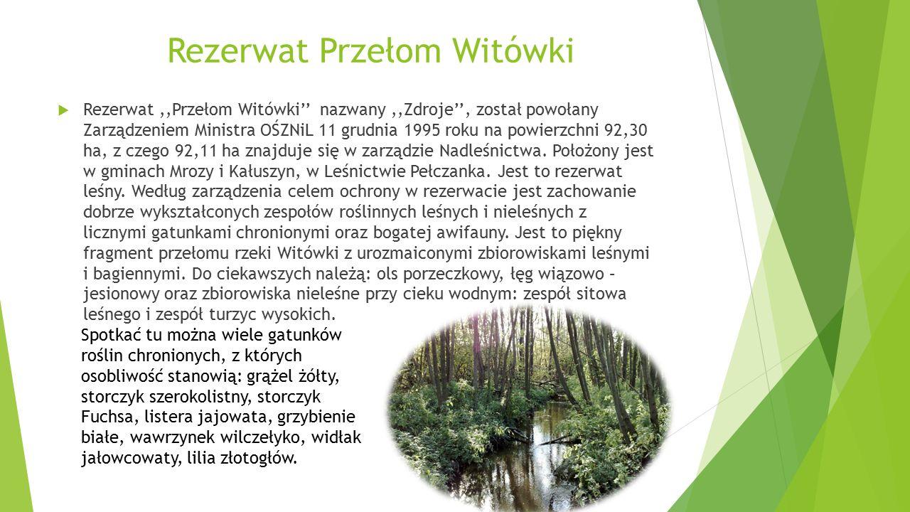  Rezerwat,,Przełom Witówki'' nazwany,,Zdroje'', został powołany Zarządzeniem Ministra OŚZNiL 11 grudnia 1995 roku na powierzchni 92,30 ha, z czego 92,11 ha znajduje się w zarządzie Nadleśnictwa.