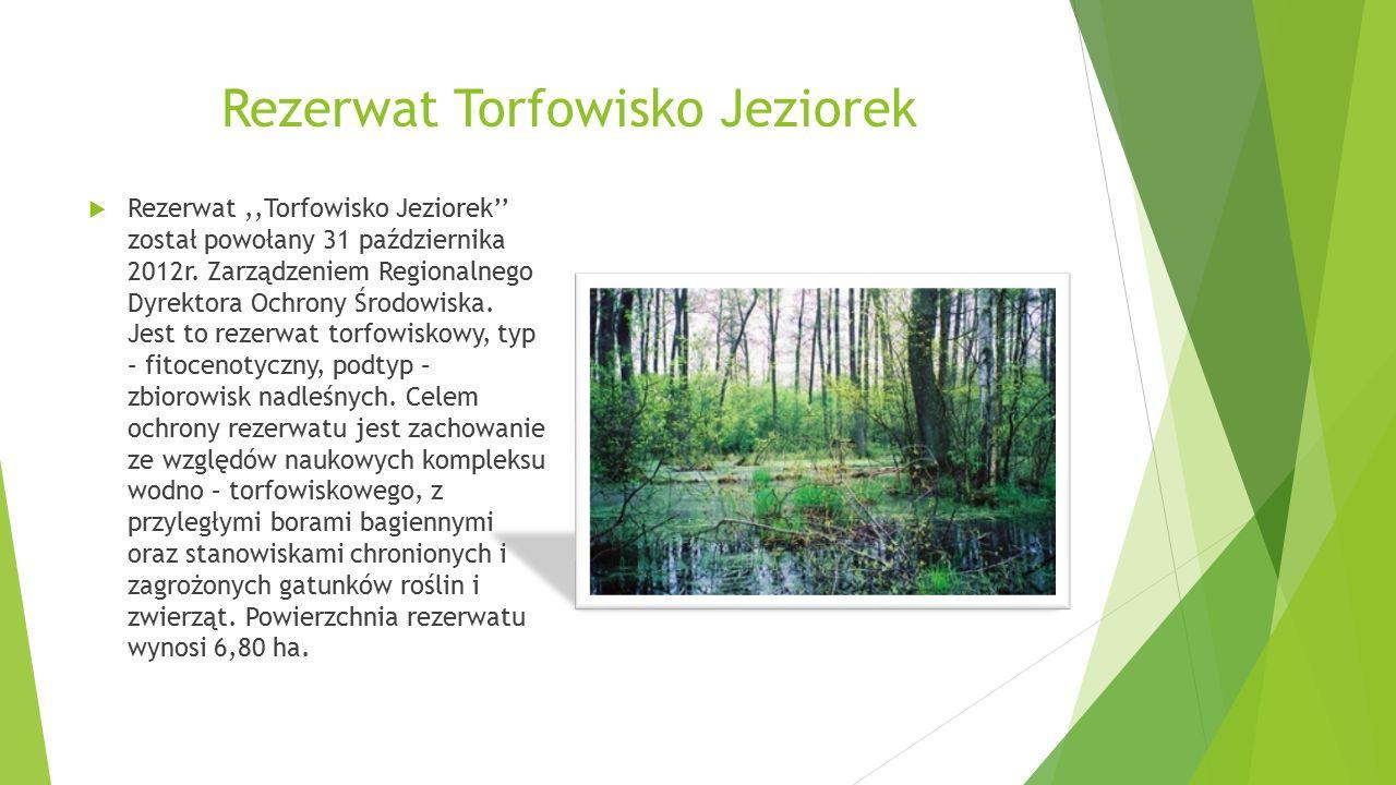 Rezerwat Torfowisko Jeziorek  Rezerwat,,Torfowisko Jeziorek'' został powołany 31 października 2012r.