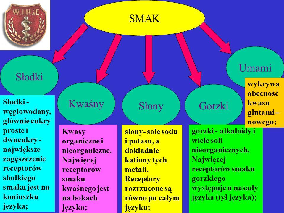 SMAK Słodki Kwaśny SłonyGorzki Umami Słodki - węglowodany, głównie cukry proste i dwucukry - największe zagęszczenie receptorów słodkiego smaku jest na koniuszku języka; słony- sole sodu i potasu, a dokładnie kationy tych metali.