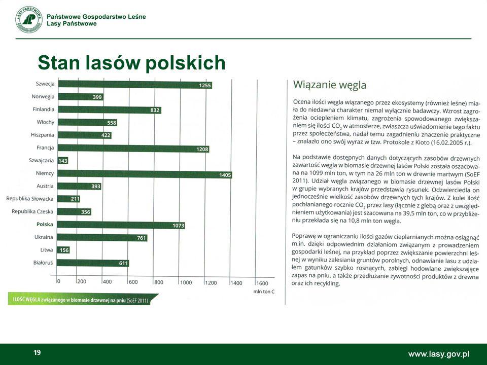 19 Stan lasów polskich