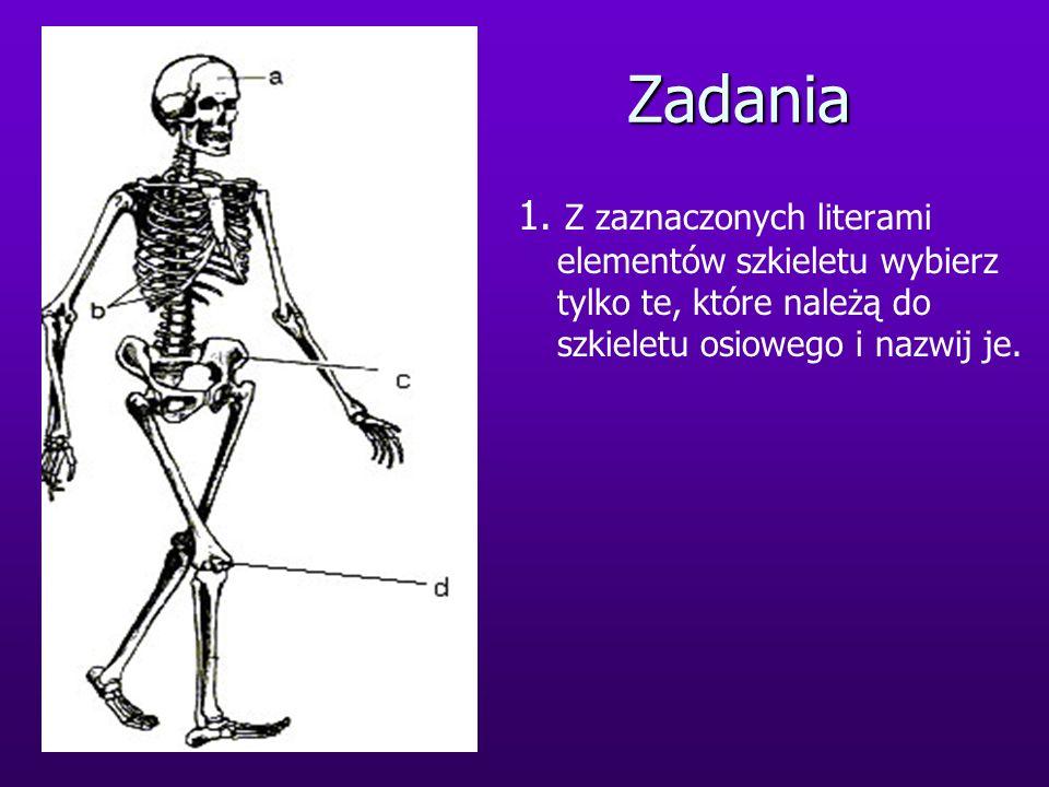 Zadania 1. Z zaznaczonych literami elementów szkieletu wybierz tylko te, które należą do szkieletu osiowego i nazwij je.