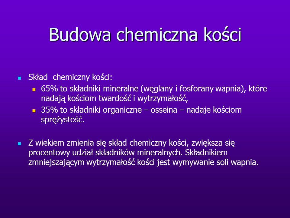 Budowa chemiczna kości Skład chemiczny kości: 65% to składniki mineralne (węglany i fosforany wapnia), które nadają kościom twardość i wytrzymałość, 3