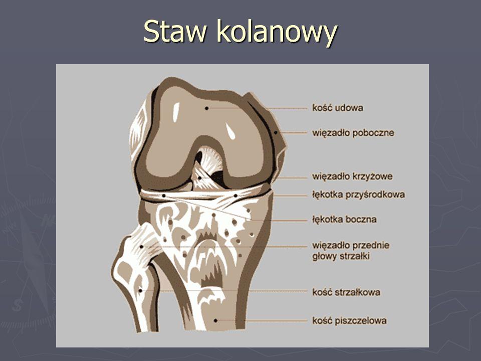 Staw kolanowy