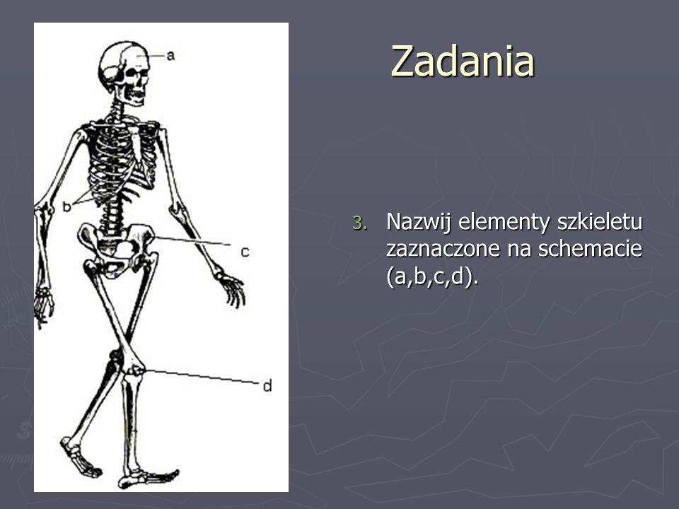 Zadania 3. Nazwij elementy szkieletu zaznaczone na schemacie (a,b,c,d).