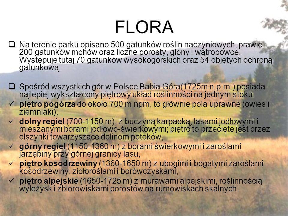 FLORA  Na terenie parku opisano 500 gatunków roślin naczyniowych, prawie 200 gatunków mchów oraz liczne porosty, glony i wątrobowce.