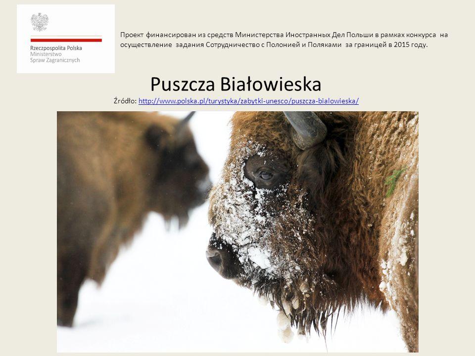 Puszcza Białowieska Źródło: http://www.polska.pl/turystyka/zabytki-unesco/puszcza-bialowieska/http://www.polska.pl/turystyka/zabytki-unesco/puszcza-bi