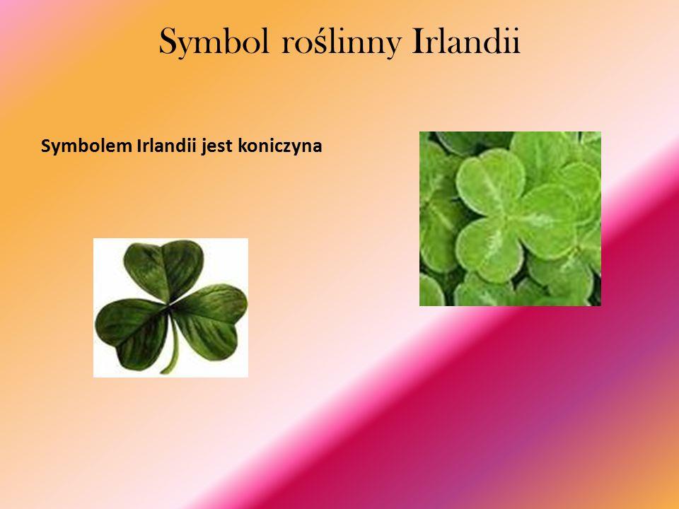 Symbol ro ś linny Irlandii Symbolem Irlandii jest koniczyna