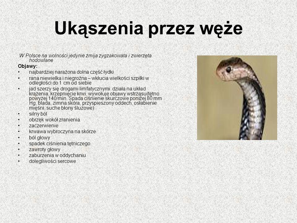Ukąszenia przez węże W Polsce na wolności jedynie żmija zygzakowata i zwierzęta hodowlane Objawy: najbardziej narażona dolna część łydki rana niewielka i niegroźna – wkłucia wielkości szpilki w odległości do 1 cm od siebie jad szerzy się drogami limfatycznymi: działa na układ krążenia, krzepnięcie krwi, wywołuje objawy wstrząsu(tętno powyżej 140/min.