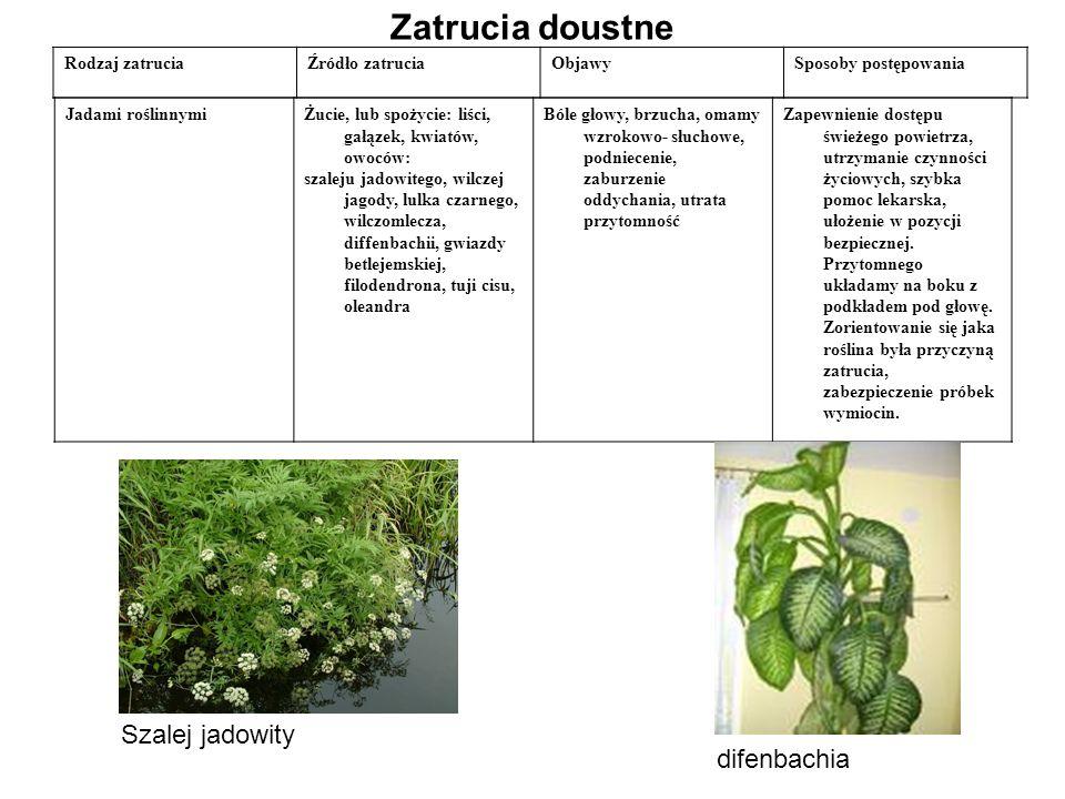 Zatrucia doustne Rodzaj zatruciaŹródło zatruciaObjawySposoby postępowania Jadami roślinnymiŻucie, lub spożycie: liści, gałązek, kwiatów, owoców: szaleju jadowitego, wilczej jagody, lulka czarnego, wilczomlecza, diffenbachii, gwiazdy betlejemskiej, filodendrona, tuji cisu, oleandra Bóle głowy, brzucha, omamy wzrokowo- słuchowe, podniecenie, zaburzenie oddychania, utrata przytomność Zapewnienie dostępu świeżego powietrza, utrzymanie czynności życiowych, szybka pomoc lekarska, ułożenie w pozycji bezpiecznej.