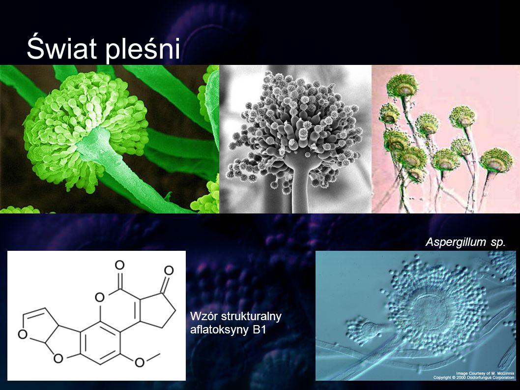 Świat pleśni Aspergillum sp. Wzór strukturalny aflatoksyny B1