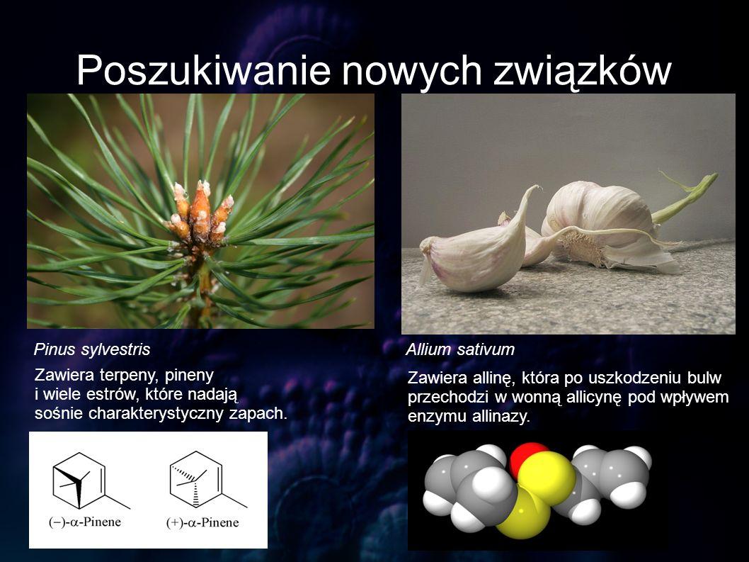 Poszukiwanie nowych związków Pinus sylvestrisAllium sativum Zawiera terpeny, pineny i wiele estrów, które nadają sośnie charakterystyczny zapach. Zawi