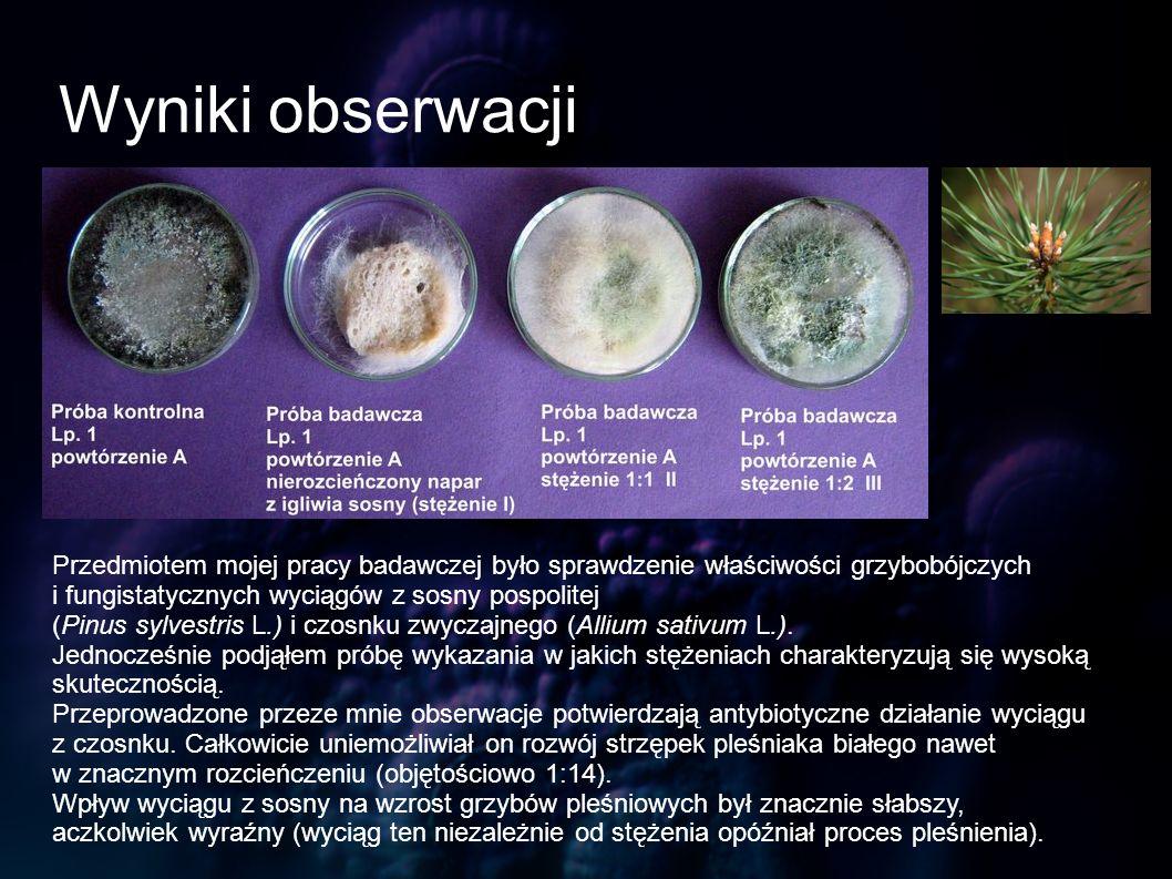 Przedmiotem mojej pracy badawczej było sprawdzenie właściwości grzybobójczych i fungistatycznych wyciągów z sosny pospolitej (Pinus sylvestris L.) i c