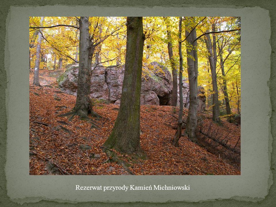 Rezerwat przyrody Kamień Michniowski
