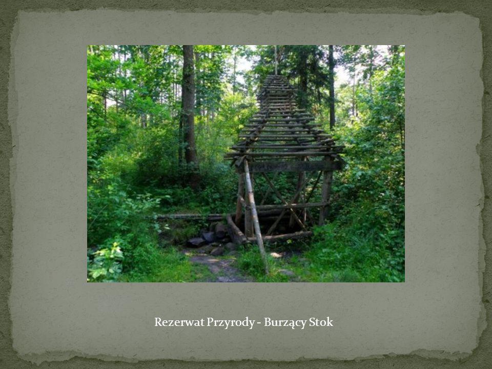 Rezerwat Przyrody - Burzący Stok