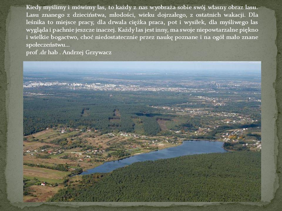 Kiedy myślimy i mówimy las, to każdy z nas wyobraża sobie swój własny obraz lasu.