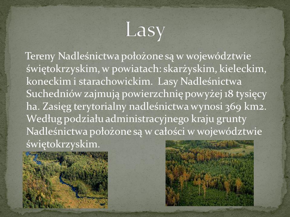 Tereny Nadleśnictwa położone są w województwie świętokrzyskim, w powiatach: skarżyskim, kieleckim, koneckim i starachowickim.