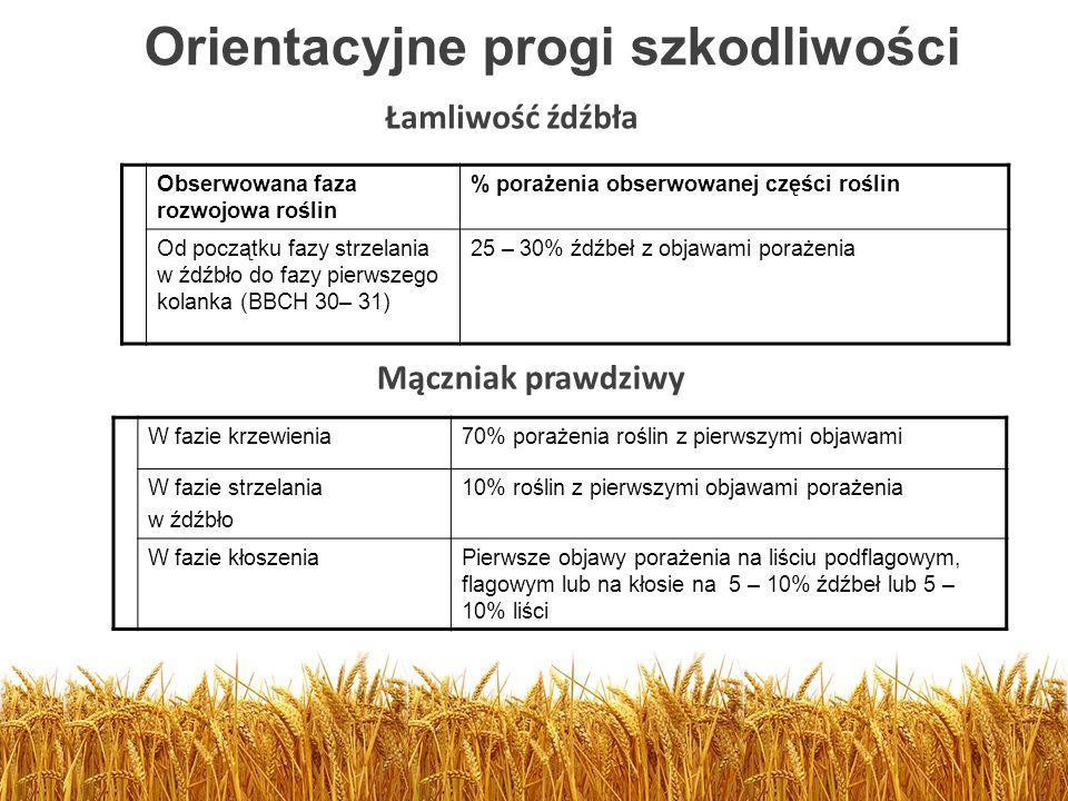 Orientacyjne progi szkodliwości Obserwowana faza rozwojowa roślin % porażenia obserwowanej części roślin Od początku fazy strzelania w źdźbło do fazy