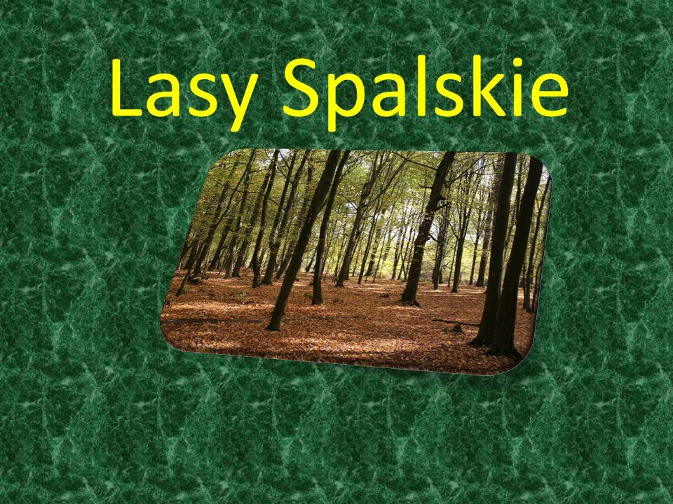 Lasy Spalskie