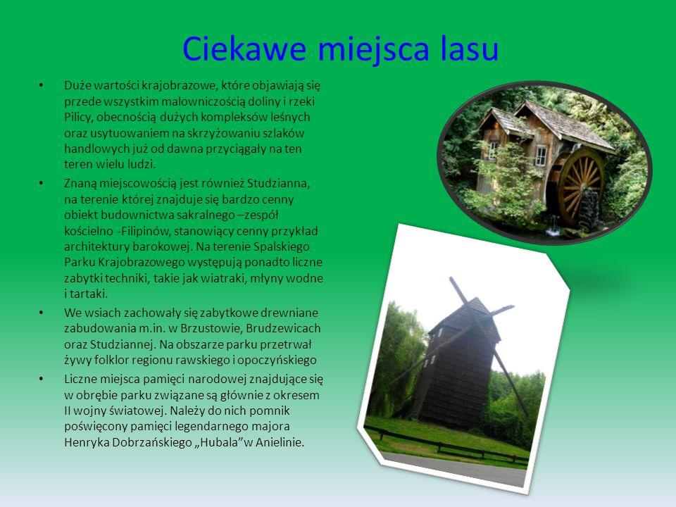 Praca w nadleśnictwie Nadleśnictwo, działa na podstawie ustawy z dnia 28 września 1991r o lasach oraz aktów wykonawczych do tej ustawy a w szczególności Statutu Państwowego Gospodarstwa Leśnego Lasy Państwowe, oraz na podstawie innych powszechnie obowiązujących przepisów prawa.