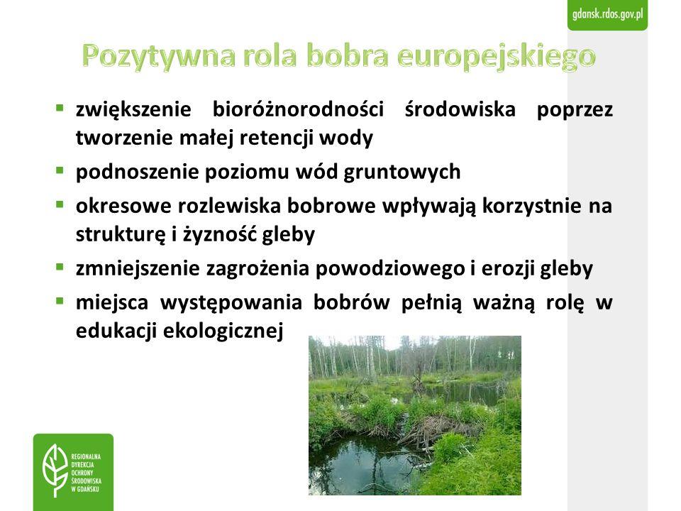  zwiększenie bioróżnorodności środowiska poprzez tworzenie małej retencji wody  podnoszenie poziomu wód gruntowych  okresowe rozlewiska bobrowe wpływają korzystnie na strukturę i żyzność gleby  zmniejszenie zagrożenia powodziowego i erozji gleby  miejsca występowania bobrów pełnią ważną rolę w edukacji ekologicznej