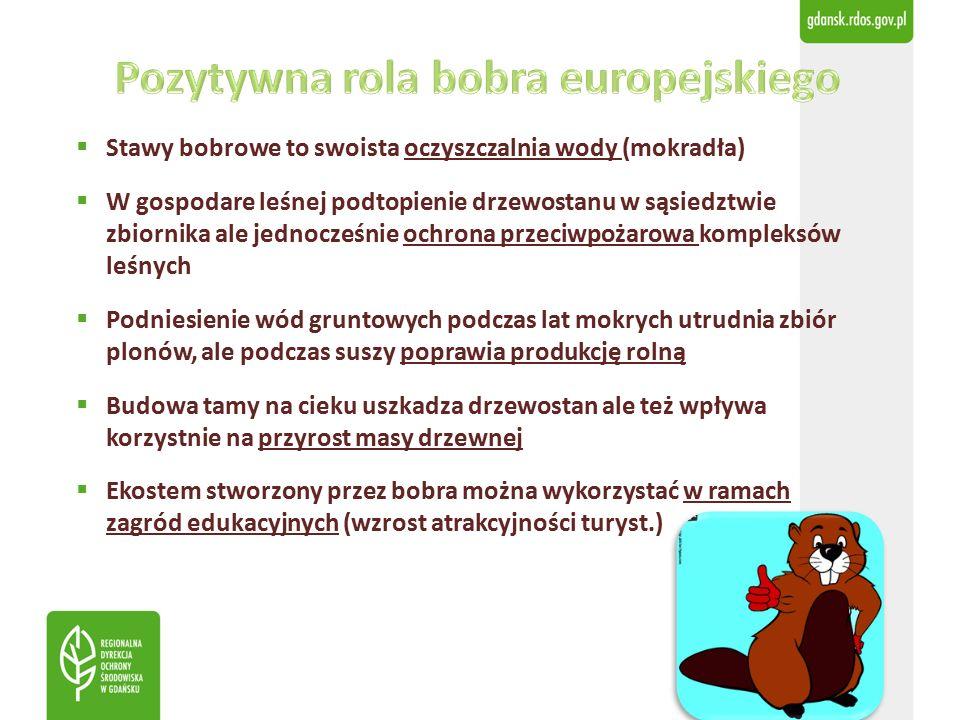  Stawy bobrowe to swoista oczyszczalnia wody (mokradła)  W gospodare leśnej podtopienie drzewostanu w sąsiedztwie zbiornika ale jednocześnie ochrona