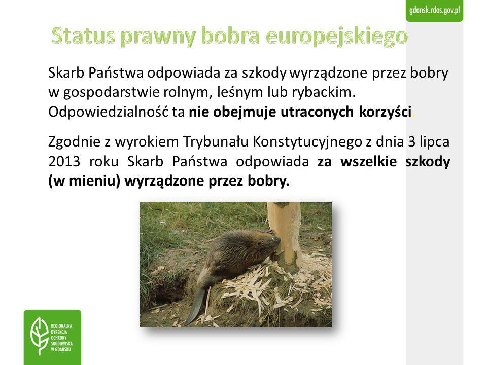 Skarb Państwa odpowiada za szkody wyrządzone przez bobry w gospodarstwie rolnym, leśnym lub rybackim. Odpowiedzialność ta nie obejmuje utraconych korz