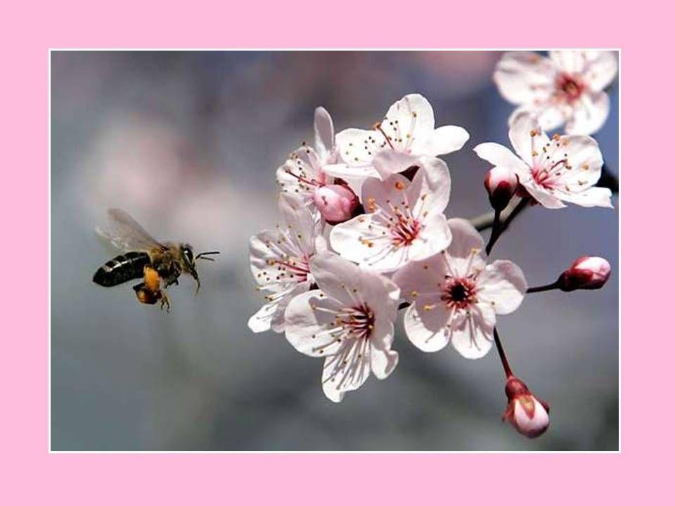 - nie stosowanie środków toksycznych dla pszczół w okresie kwitnienia roślin, - unikanie opryskiwania plantacji, na których występują kwitnące chwasty, - dobieranie preparatów mało toksycznych dla pszczół, - przestrzeganie okresów prewencji, - przeciwdziałanie znoszeniu cieczy roboczej podczas zabiegu, - wykonywanie zabiegów wieczorem, po zakończonych lotach owadów.