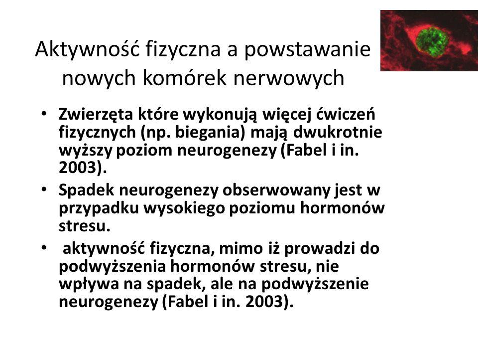 Aktywność fizyczna a powstawanie nowych komórek nerwowych Zwierzęta które wykonują więcej ćwiczeń fizycznych (np.