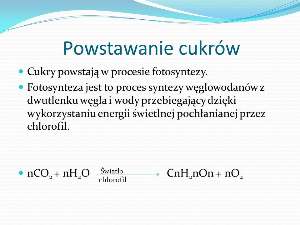 Powstawanie cukrów Cukry powstają w procesie fotosyntezy.