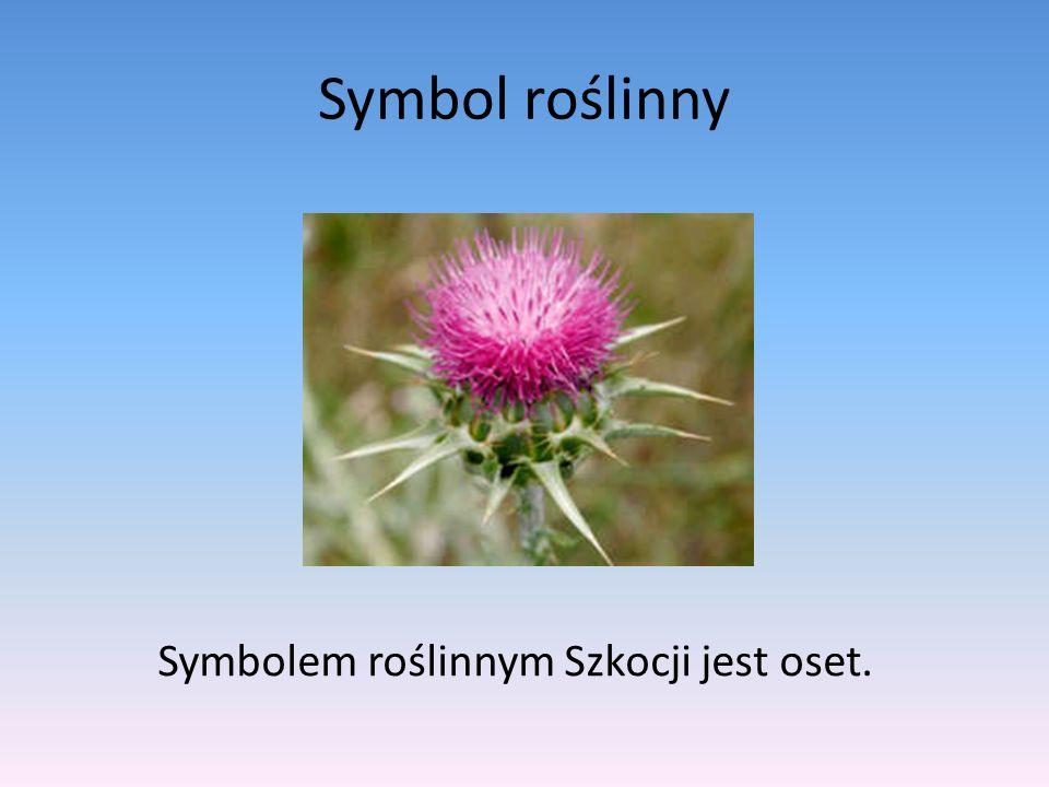 Symbol roślinny Symbolem roślinnym Szkocji jest oset.