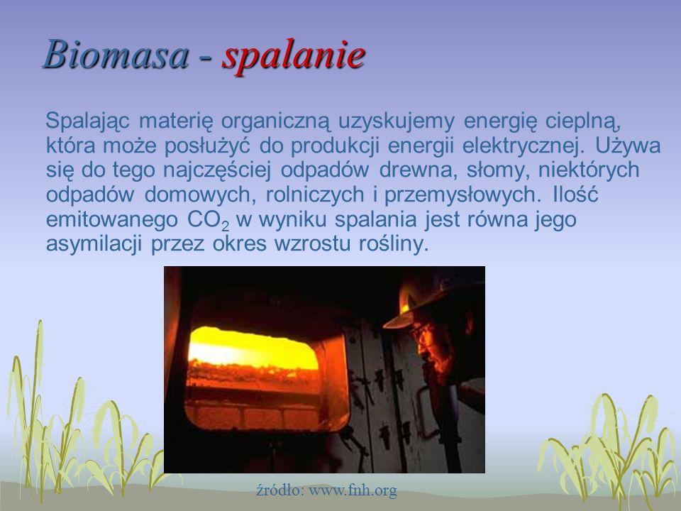 Biomasa - spalanie Spalając materię organiczną uzyskujemy energię cieplną, która może posłużyć do produkcji energii elektrycznej.