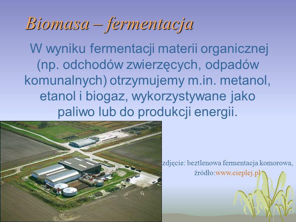 Biomasa – fermentacja W wyniku fermentacji materii organicznej (np.