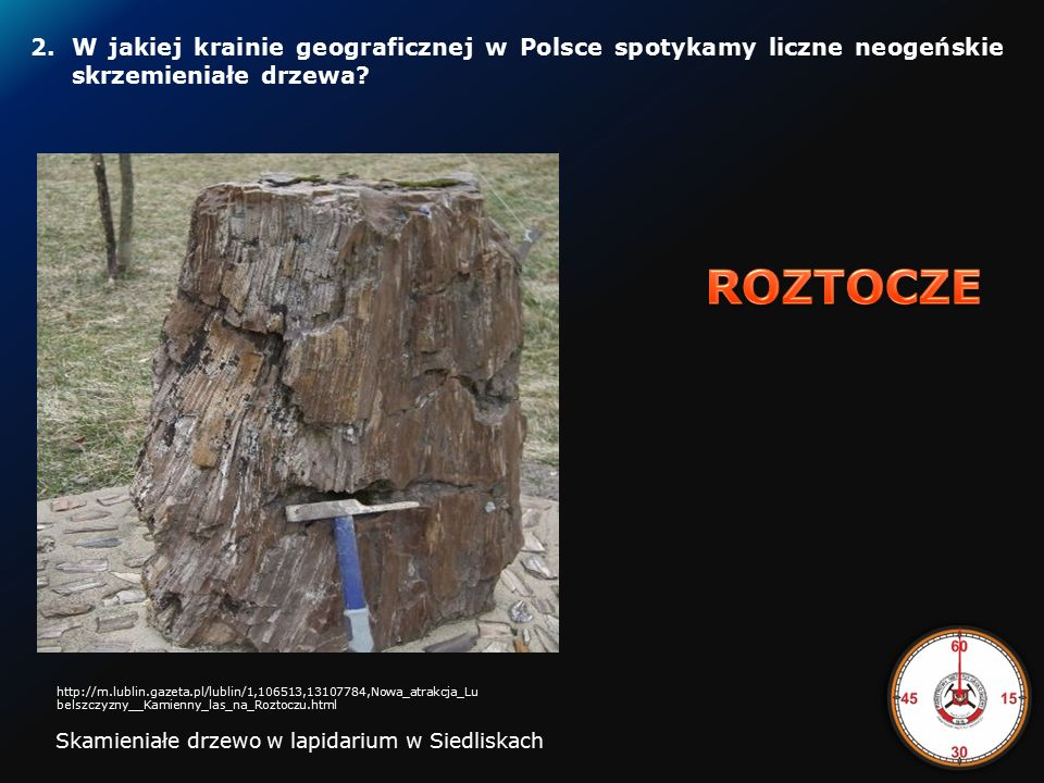1. Jak nazywa się miejscowość, w rejonie której wydobyto kości ssaków plejstoceńskich, które posłużyły do rekonstrukcji szkieletu mamuta w Muzeum Geol